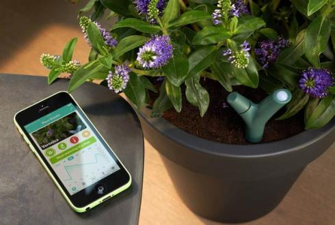 'Parrot' for plants